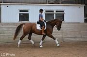 Hest til salg - WAIHI