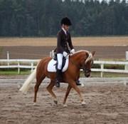 Hest til salg - BARBIE STELLA