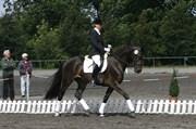 Hest til salg - LADY-ALEXIA-LINO