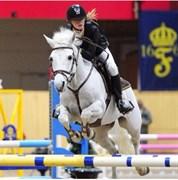 Hest til salg - FRODO BAGGINS