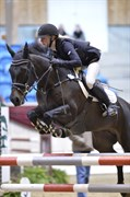 Hest til salg - ASTANA AF HØJGÅRDEN