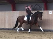 Hest til salg - JACKIE GERSDORF