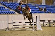 Hest til salg - DREAMHEART