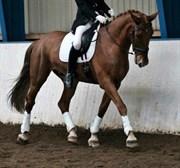 Hest til salg - Mr. Sunshine