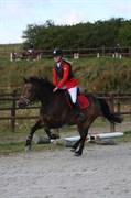 Hest til salg - FELIX