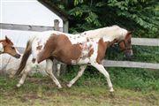 Hest til salg - FIONA E