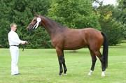 Hest til salg - WRIGLEY'Z
