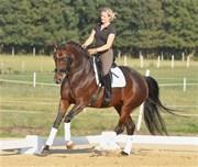 Hest til salg - Lulu