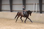Hest til salg - TEX TINO SMED