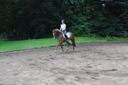 Hest til salg - Disco