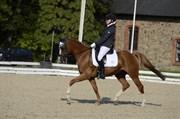 Hest til salg - BOUWERSHOF CONAIR