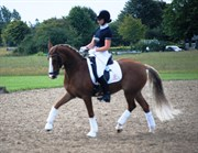Hest til salg - VANESSA-D