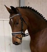 Hest til salg - HIGHLIGHT TM