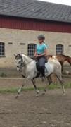 Hest til salg - CHECK-IN