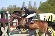 Hest til salg - LOTTE
