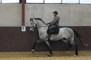 Hest til salg - HUSSMANNS SIR RUBIN