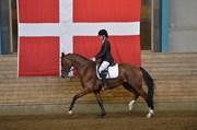 Hest til salg - TORPEGAARD'S DICAISY
