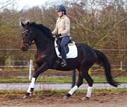 Hest til salg - ROERSLEVGAARD'S MAELINE
