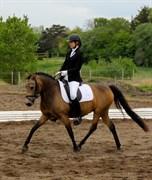 Hest til salg - Philippa