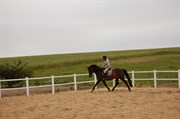 Hest til salg - BAKKEGAARDENS KALLIE