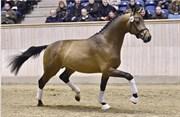 Hest til salg - 46 - DORTHEASMINDES TWIS