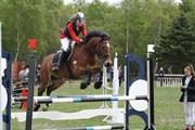 Hest til salg - LSH SPIRIOT
