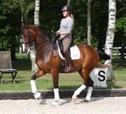Hest til salg - AMAZING SØNDERGÅRD