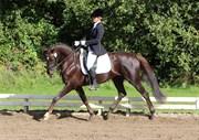 Hest til salg - A-NOIR
