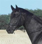 Hest til salg - DUCATI MAX