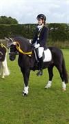Hest til salg - DORTHEALYST FRANCO (OS)