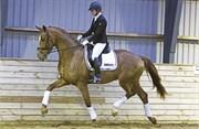 Hest til salg - 30 - MARSHALL-BELL