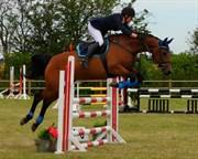 Hest til salg - ALVARA