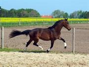 Hest til salg - ELVERSØES DIMPLE