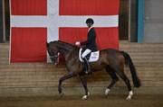 Hest til salg - SKIKKILD'S HALIFAX