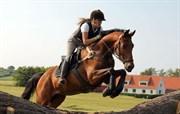 Hest til salg - RAYPAWERS BELIEVE