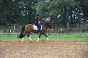 Hest til salg - HAAHR'S FANTASILIE