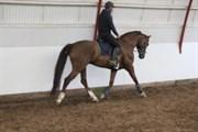 Hest til salg - BREDMOSE'S DE ROUGE