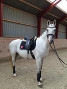 Hest til salg - NØRLUNDS SUNBEAM