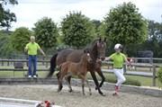 Hest til salg - LILLEGAARDENS ZOEY