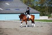Hest til salg - Ellelys Scirocco