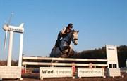 Hest til salg - Stan