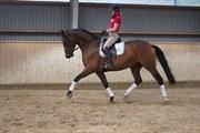 Hest til salg - REINHOLTS RABOCHA