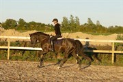 Hest til salg - SILKE