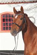Hest til salg - Lucky Lesly