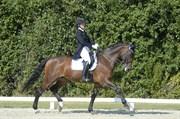 Hest til salg - CORINA