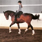 Hest til salg - ACTION SØNDERVANG