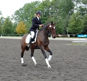 Hest til salg - QUENNY ZARINA