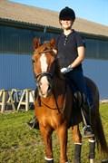 Hest til salg - Rano