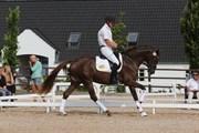 Hest til salg - CHRISTIANSLUND PARI DOT