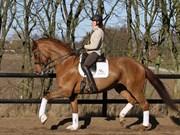 Hest til salg - Donia